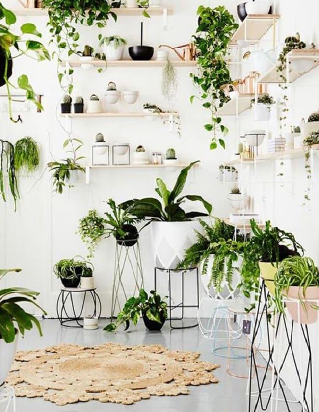 Plant 1-min